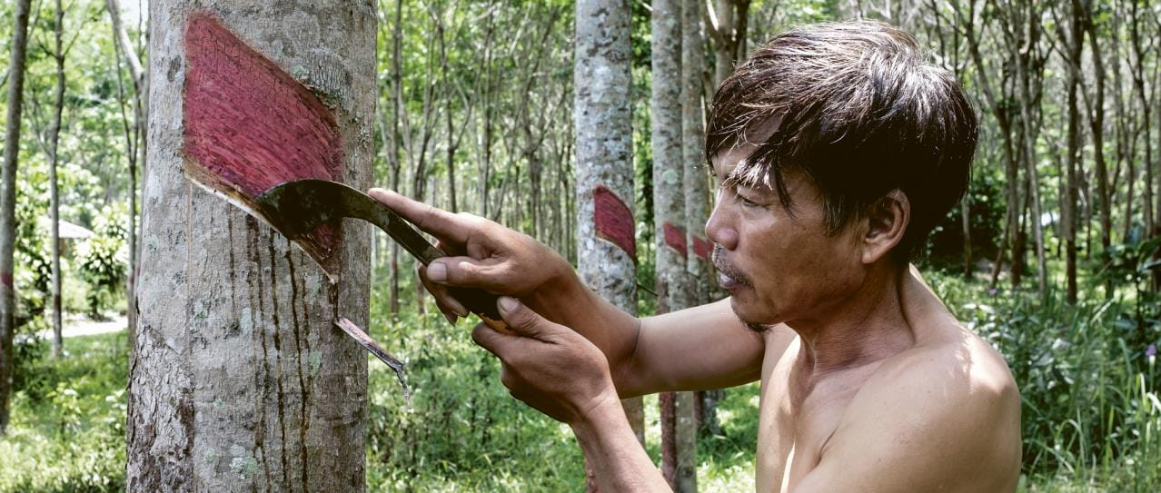 man harvesting rubber
